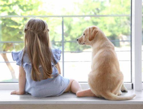 Pet Proof Window Treatments