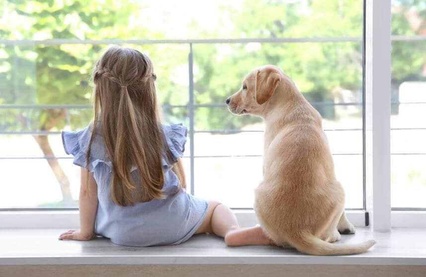 Pet Proof Window Treatments Luxury Window Coverings
